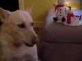 Cão canta Jingle Bells