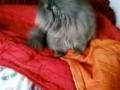 Pantufa, o massagista