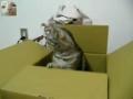 Gato domina código morse
