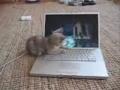 Geração tecnológica: manter o gato ocupado
